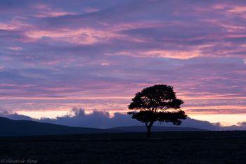 Tree-near-Malham-Tarn
