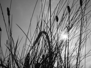 In_the_long_grass_by_bod27-d3jxvwg