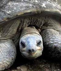 Tortoise_2
