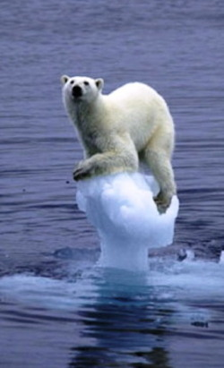 Polarbeartrouble
