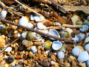 Chesapeakeflotsam_2