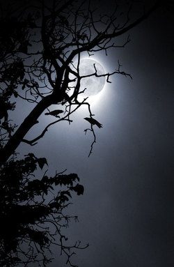 Moon_in_branches